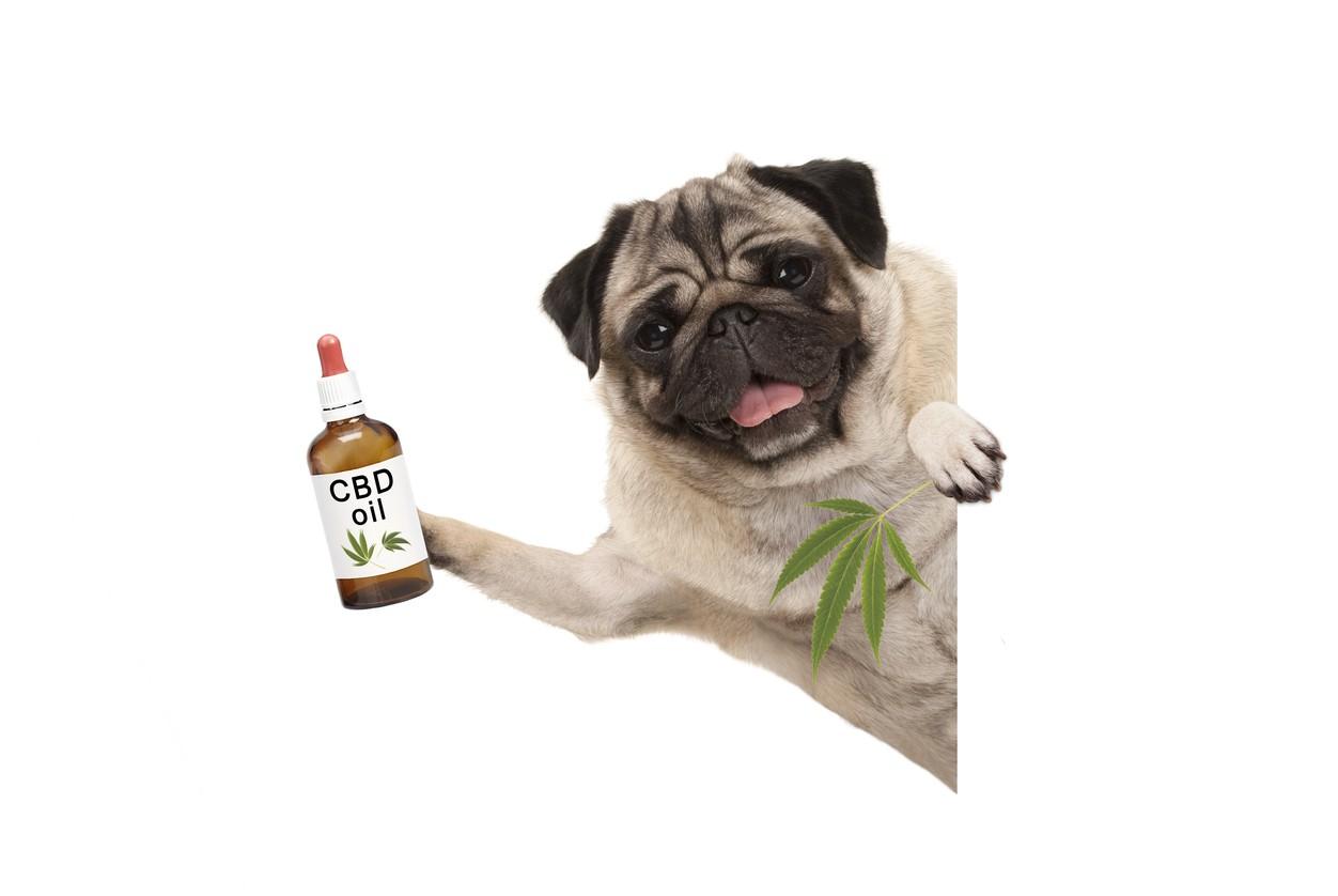 cannabis medication